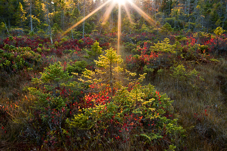 Autumn in Acadia National Park Photography Workshop - 2015