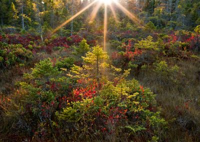 Acadia-National-Park-Photo-Workshop003