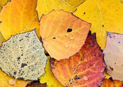 Autumn-in-Vermont-Photo-Workshop006