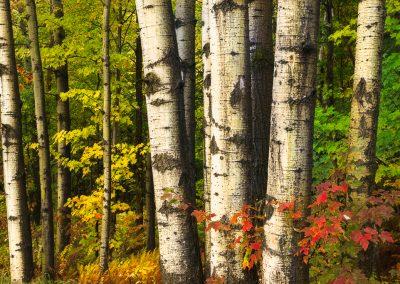 Autumn-in-Vermont-Photo-Workshop013