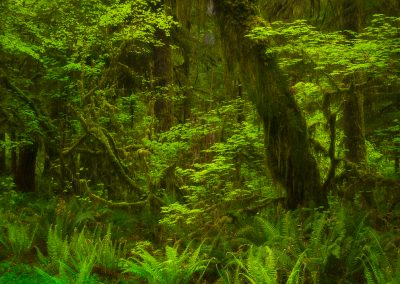Olympic-National-Park-Photography-Workshop005
