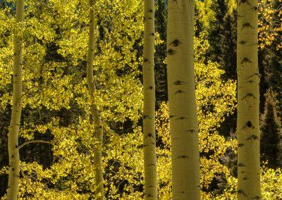 Colorado-Photography-Workshop001