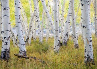 Colorado-Photography-Workshop005