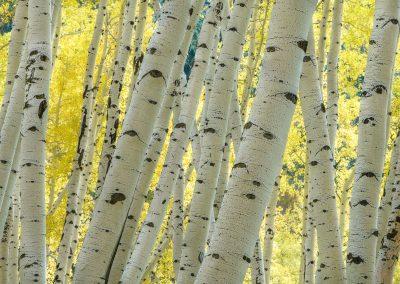 Colorado-Photography-Workshop009